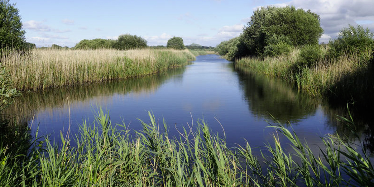 Photo of reed beds and a canal the Somerset levels